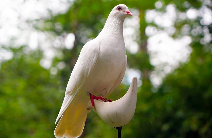 dove on perch