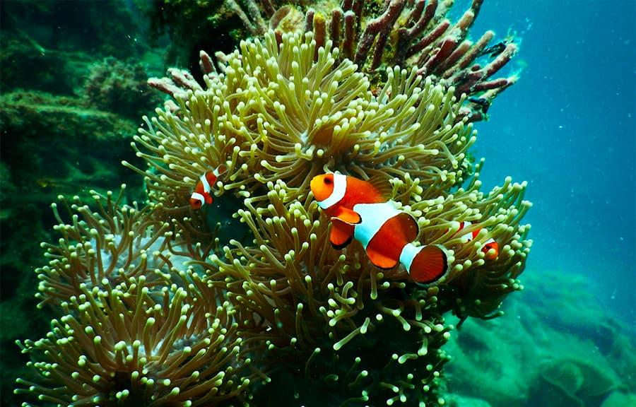 fish names - clownfish