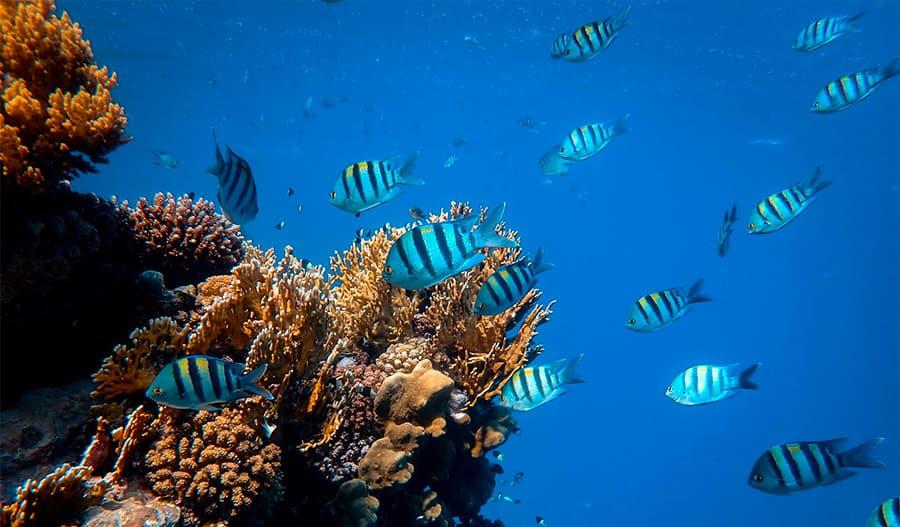fish names - school of fish