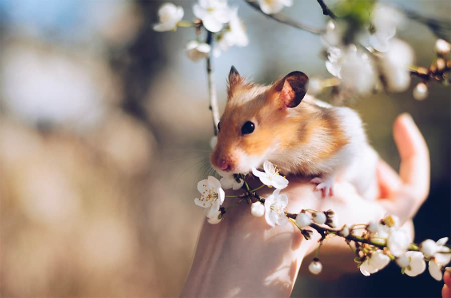 hamster names - hamster with flowers