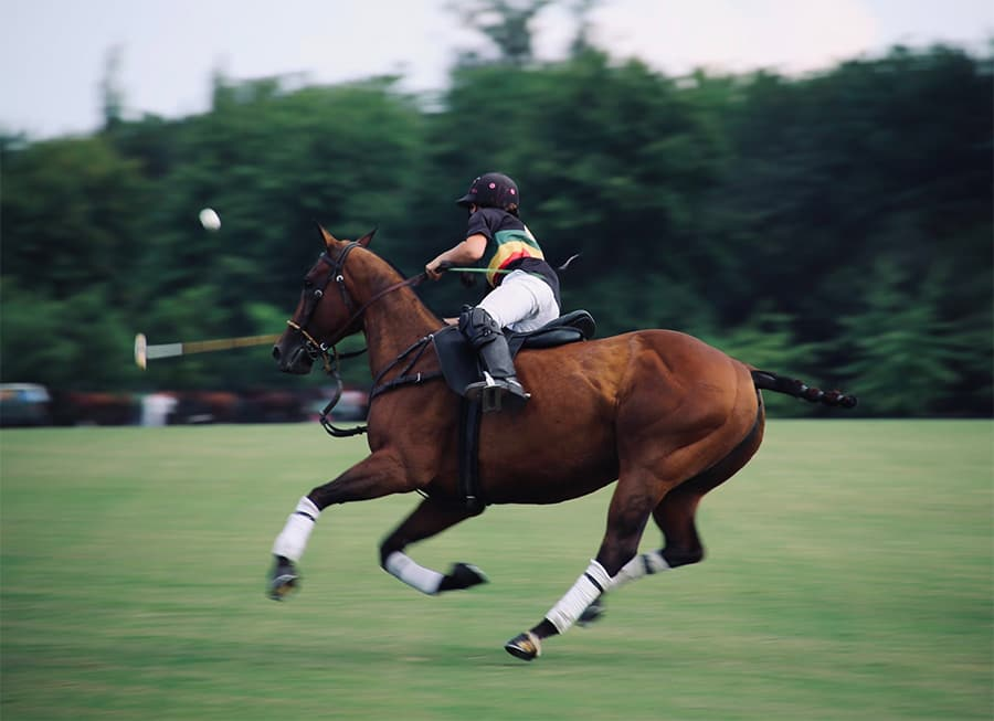 horse playing polo