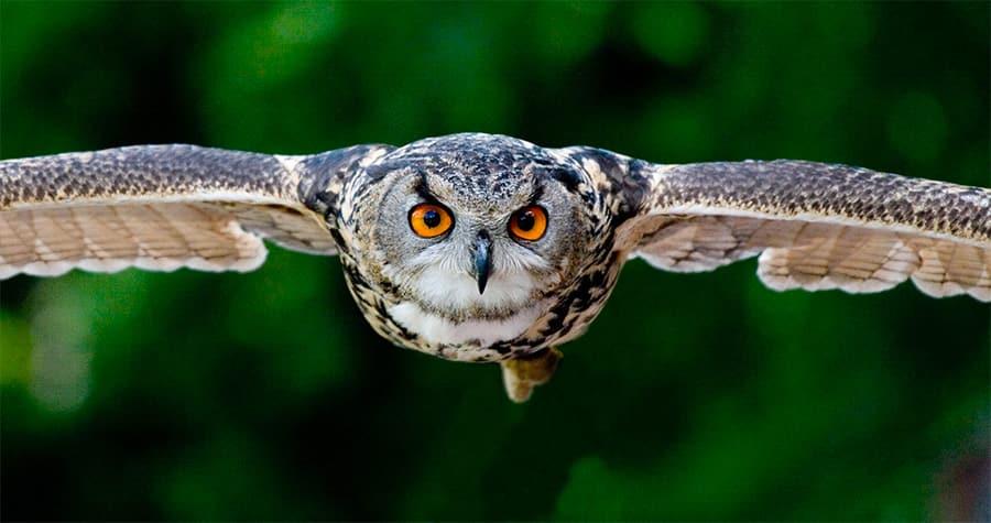 owl names - owl flying