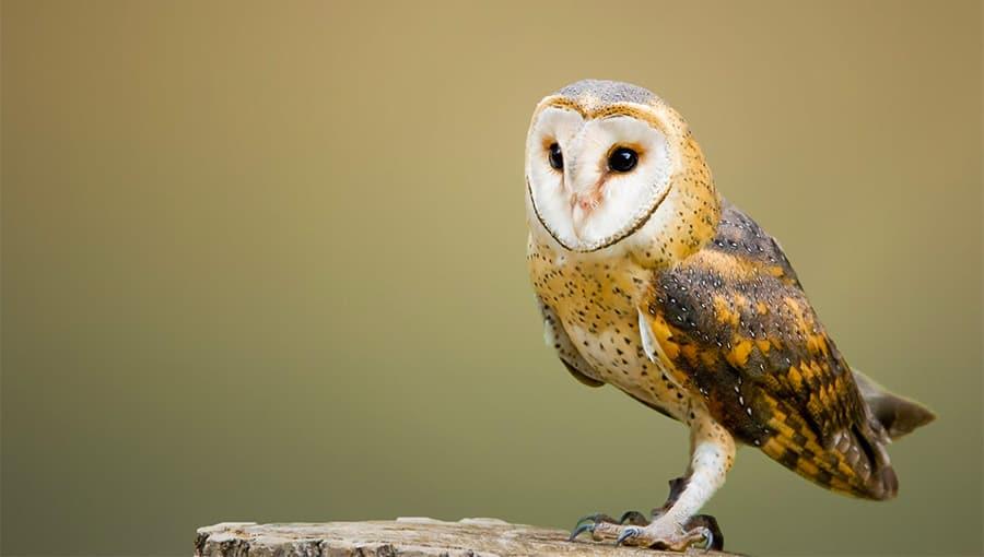 owl names - face