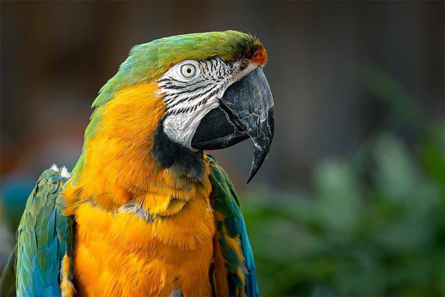 parrot bird names