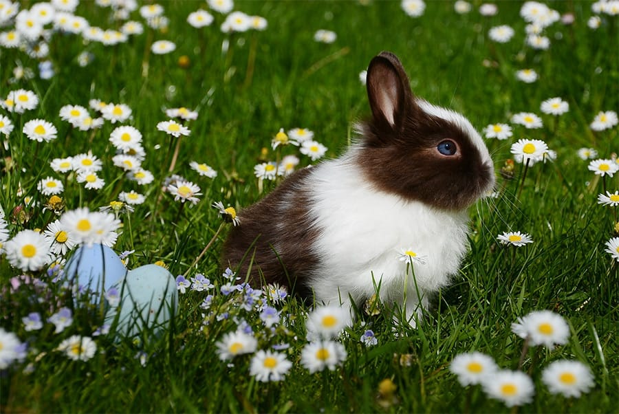 rabbit names - bunny in grass and flowers