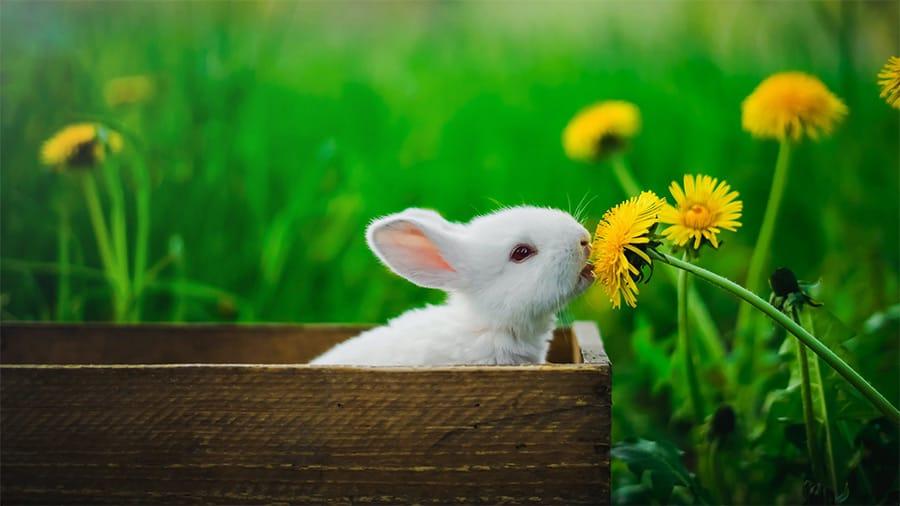 rabbit names - bunny eating flower