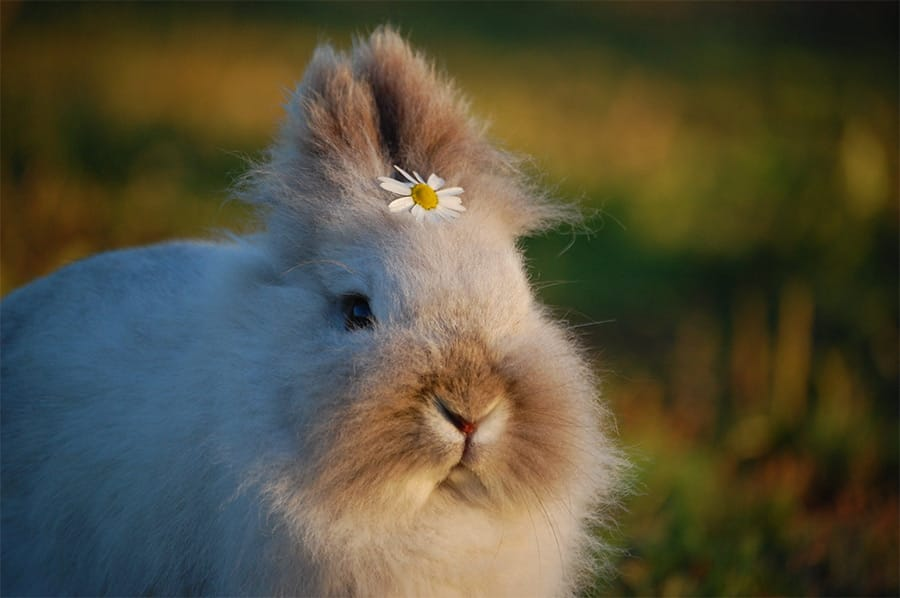 rabbit with flower in hair