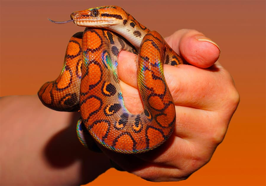 snake names - snake wrapped around hand