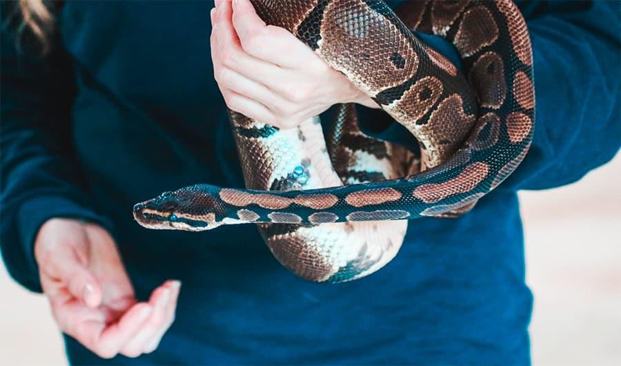 snake wrapped around arm