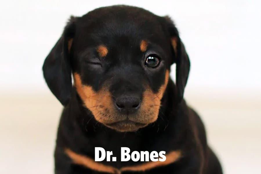 funny dog name