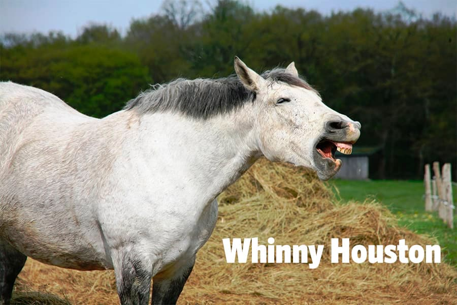 funny animal names - horse