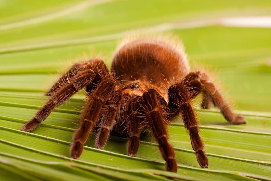 spider names - tarantula on plant