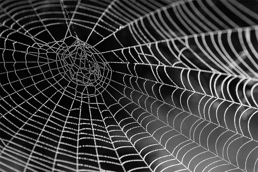cool spider web photo