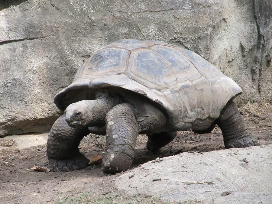 tortoise near rocks