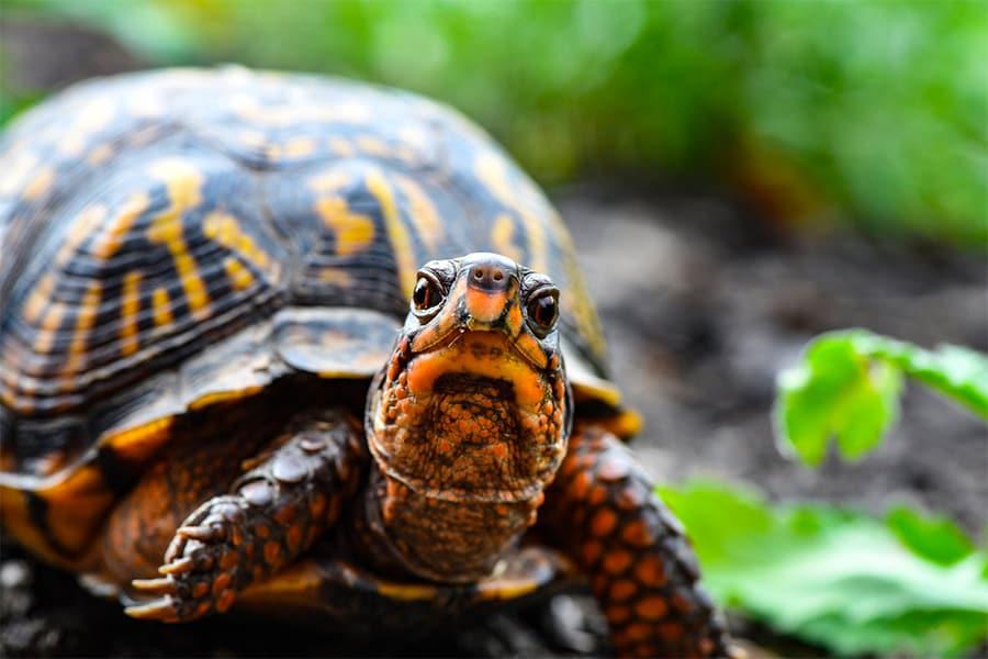 turtle names - turtle in woods