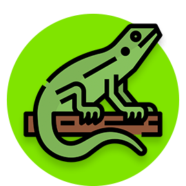 lizard names icon