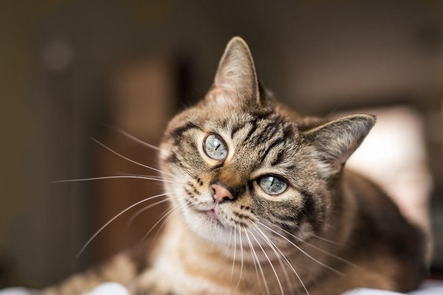 cat name generator